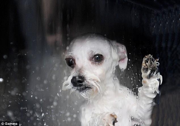 Dog-O-Matic - dla osób o mocnych nerwach
