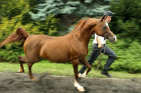 Najdroższe konie świata