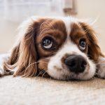 Wychowanie psa - o czym warto pamiętać decydując się na psa?